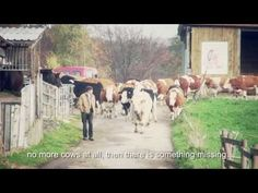 """▶ """"Happy Cows"""" second part / gerettete Kühe 2.Teil / saved Cows with engl. subtitles - YouTube"""