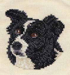 border collie knitting pattern - Google leit Border Collie Pinterest Do...