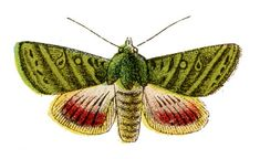 Vintage Graphics - Colorful Moths or Butterflies - The Graphics Fairy