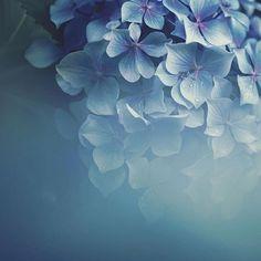 """좋아요 1,330개, 댓글 5개 - Instagram의 TRANSFER VISIONS Flowers(@tv_flowers)님: """"Presents . Featured Artist: @30ko Congratulations! ________________________________________ ▪…"""""""