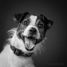 Dog BW photography