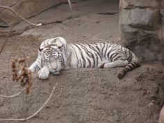 A rare tiger cub died tragically after being exposed to freezing temperatures during a zoo power outage. Demand that a backup power source be put in place and stop the suffering of zoo animals.