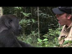 Gorilla Reunion: Damian Aspinall's Extraordinary Gorilla Encounter on Go...
