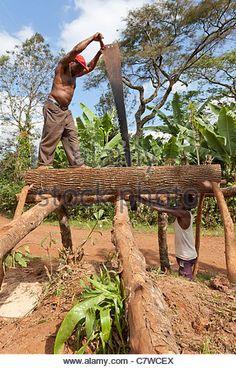 men-pit-sawing-a-log-to-make-timber-mwika-moshi-tanzania-c7wcex.jpg (346×540)