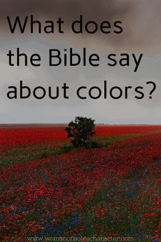 Colors in the Bible: Rich with meaning and symbolism Bible Scriptures, Bible Quotes, Christ Quotes, Biblical Verses, Bible Teachings, Lyric Quotes, Movie Quotes, Wisdom Quotes, Quotes Quotes