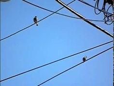 bird landing in slow motion - YouTube