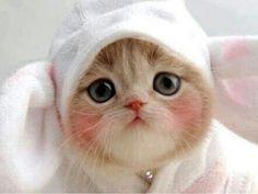cute kitten♡