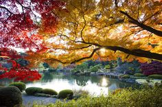 Fall in Tokyo, Japan -- Go later in the season, since the hues are most vibrant in late November to early December. The best places for foliage in the city include Rikugien Garden, Koishikawa Korakuen and Mount Takao. - Getty Images