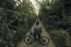Bicicleta, Longa Estrada, Caminho, Natureza, Floresta