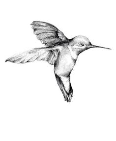 Dreaming of getting a humming bird tattoo one day <3