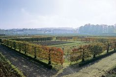 The extraordinary espaliered fruit tree cordons in autumn at Le potager du Roi, at the Palace of Versailles.