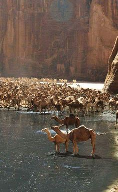 The waterhole - Chad. One or two camels...