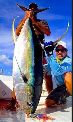 Yellowfin Tuna Want to catch that one! Best Fishing Lures, Tuna Fishing, Sport Fishing, Kayak Fishing, Fishing Tips, Fishing Reels, Marlin Fishing, Walleye Fishing, Salmon Fishing
