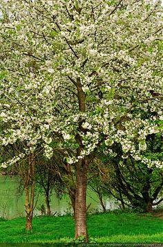 Nom du fichier=Arbre-en-fleurs-en-bord-de-Marne.jpg Taille du fichier=1655Ko Dimensions du wallpaper / de la photo HD : 1272x1915 Image ajoutée le : 28 Avril 2013