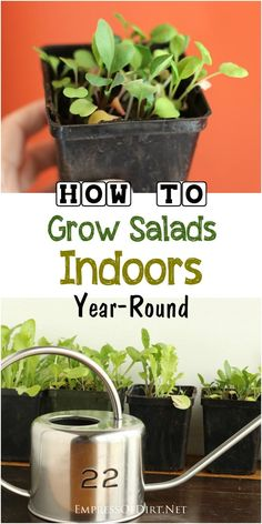 The o 39 jays vegetables and nature on pinterest - Salads can grow pots eat fresh ...