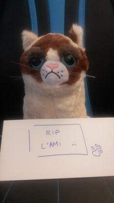 """Grumpy LDLC rend hommage à son ami Huggies, le chien de """"The Artist """" parti trop tôt !"""