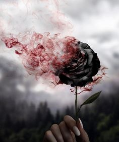 Image about flowers in fantasyyy by Bella_Ari❤️❤️ Tumblr Roses, Creative Photography, Nature Photography, Photography Magazine, Photography Reflector, Popular Photography, School Photography, Photography Lessons, Photography Editing