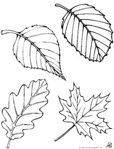 Free Fall Leaf Patterns- Print on orange yellow & red paper, then have them cut out leaves