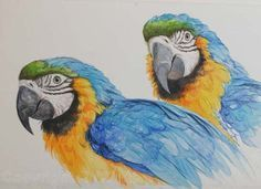 Blue and Yellow Macaws - watercolour by R. Winters - Parrot painting