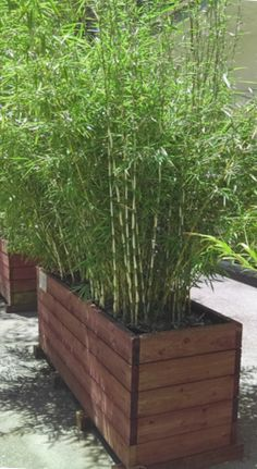 Bamboo Giant Nursery featuring exotic bamboo for retail and wholesale. Supplies and services for installing whole groves, privacy hedges or single plants. Screen Plants, Privacy Plants, Outdoor Privacy, Outdoor Plants, Outdoor Gardens, Bamboo Hedge, Bamboo Planter, Bamboo Garden, Side Yard Landscaping