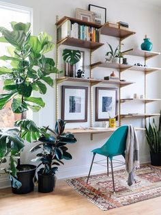 Shelves, plants, wall unit | OLD BRAND NEW:
