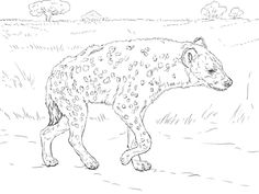 spotted hyena walking in the savannah coloring page from hyenas category select from 24858 printable