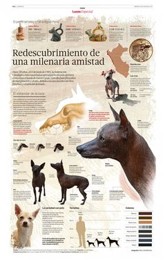 Peruvian hairless dog : rediscovery of an ancient friendship - Visualoop Hairless Animals, Mexican Hairless Dog, Group Of Dogs, All Dogs, Dog Days, Animals Beautiful, Animals And Pets, Chihuahua, Dog Breeds
