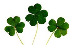#clover #green #leaves #luck #nature #plants #shamrocks