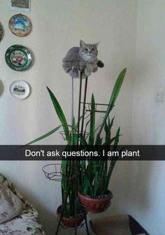 Funny Animal Pictures Funny Animal Jokes, Funny Cat Memes, Cute Funny Animals, Funniest Memes, Memes Humor, Cats Humor, Animal Humor, Funny Captions, Funny Pranks
