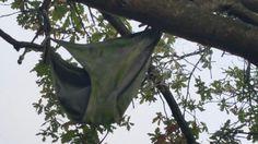 Tree pants
