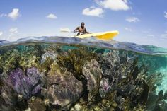 10 Great Places to See Coral Reefs. Photo by Ethan D / Frommers.com Community