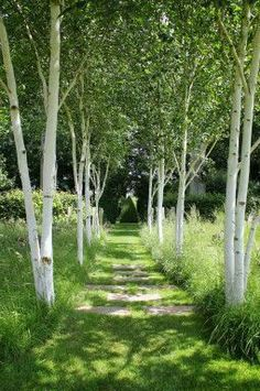 What You Can Do To Improve Your Landscaping using Garden Arbor Everyone that owns a home wants to take pride in it. Garden Arbor, Garden Trees, Back Gardens, Outdoor Gardens, Woodland Garden, Garden Architecture, Garden Landscape Design, White Gardens, Parcs
