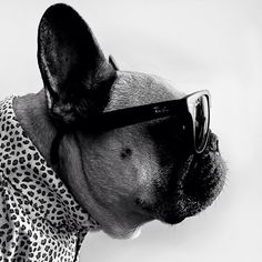 totally rocking the shades man