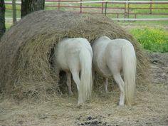cute horses | cute pony photos? Below is a gallery comprised of twenty-four cute ...