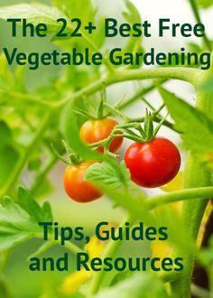 The 22+ best vegetable gardening tips, guides and grow your own resources. The best veegtable and fruit gardening resources online! Full list of helpful guides to growing, sowing and making compost, plus beginner's guides