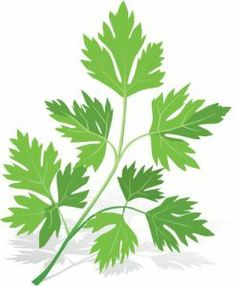 Parsley spice vector material