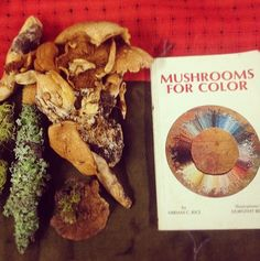 Dyeing with Mushrooms