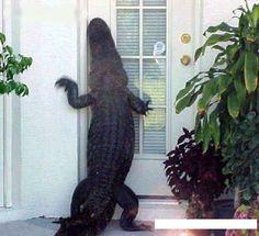 Hello,anybody home?
