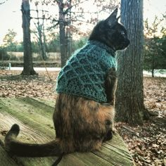 23 Cats Who Are Nailing Their Sweater Game