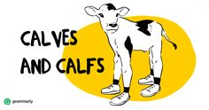 """How to Use """"Calves"""" and """"Calfs"""" Correctly"""