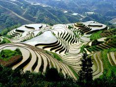 Longji Rice Terraced Field, Guilin Travel