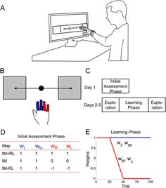 [ARTICLE] Reorganization of finger coordination patterns through motor exploration in individuals after stroke – Full Text
