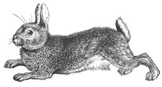 Free Black and White Rabbit Clipart - Clipart Picture 8 of 15
