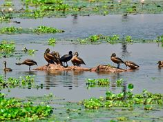 Bird Sanctuaries in Goa, India @ Sanctuariesindia.com