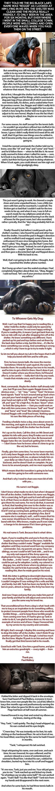 🙏PLEASE READ ME🙏 This Isn't A Typical Rescue Dog Story. The Ending Blew Me Away. A Must Read cute animals dogs adorable dog story puppy animal pets stories heart warming I Love Dogs, Puppy Love, No Bad Days, Faith In Humanity, Look At You, Rescue Dogs, Make Me Smile, In This World, Just In Case