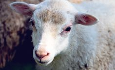 20 Farm Animals Abandoned In Freezing Temperatures Are Saved By Just The Right People   Care2 Causes