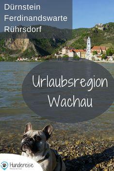 """In der niederösterreichischen Region """"Wachau"""" kannst du mit Hund ein Weltkulturerbe erkunden.   Im Frühling zur Zeit der Marillenblüte besonders zu empfehlen."""