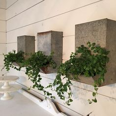When Joanna Gaines combines two of her favorite things — plants and interior design — the results are astounding. This HGTV star has a knack for