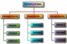 A BIOLOGICAL MOLECULE COMPOSED OF CARBON, OXYGEN, AND HYDROGEN. POLYSACCHARIDES RE ENERGY STORERS. Carbohydrates are divided into four chemical groups: monosaccharides, polysaccharides, oligosaccharides, and disaccharides