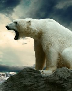 Polar - Save the earth please!                                                                                                                                                      More